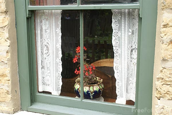 Picture of Plant in a window - Free Pictures - FreeFoto.com