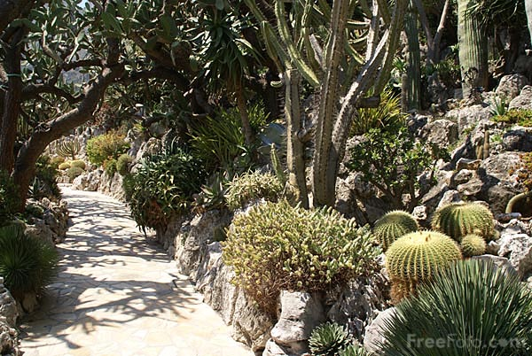 Picture of Jardin Exotique, Monaco - Free Pictures - FreeFoto.com