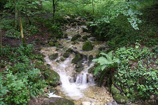 Picture of Waterfall in Strid Wood - Free Pictures - FreeFoto.com