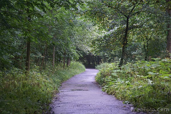Picture of Footpath through Strid Wood - Free Pictures - FreeFoto.com