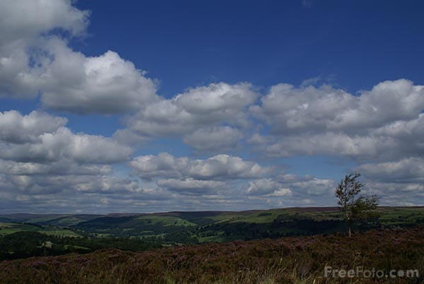 Picture of Moorland Heather on Nought Moor - Free Pictures - FreeFoto.com