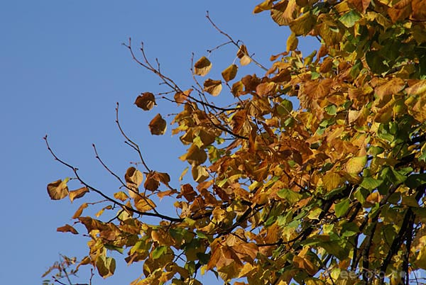 Picture of Autumn Colour Fall Color - Free Pictures - FreeFoto.com
