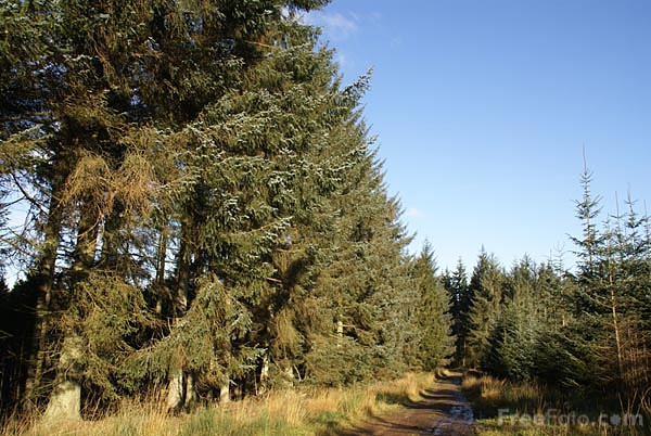Picture of Kielder Forest - Free Pictures - FreeFoto.com
