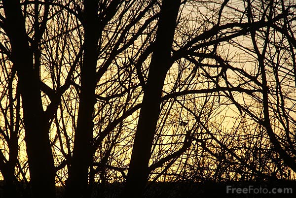 Picture of Trees at Sunset - Free Pictures - FreeFoto.com