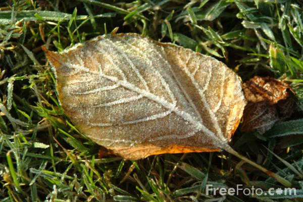 Picture of Frosty Leaf - Free Pictures - FreeFoto.com