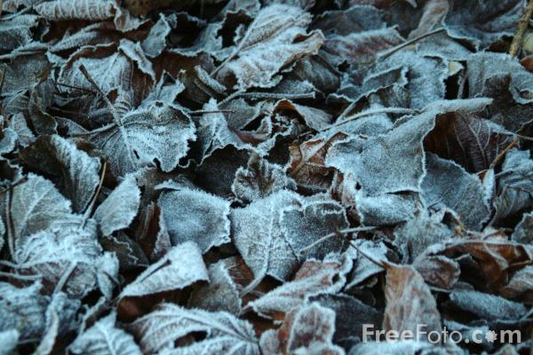 Picture of Frosty Leaves - Free Pictures - FreeFoto.com