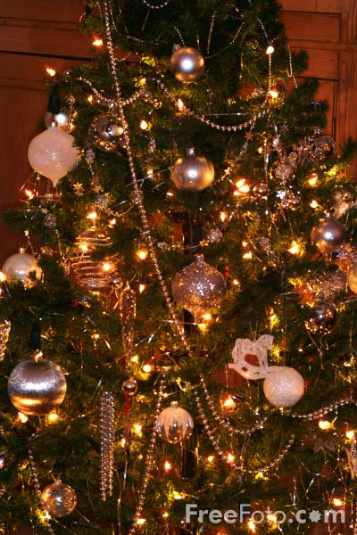 Picture of Christmas Tree - Free Pictures - FreeFoto.com