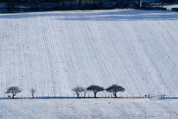 Picture of Line of trees in the winter - Free Pictures - FreeFoto.com