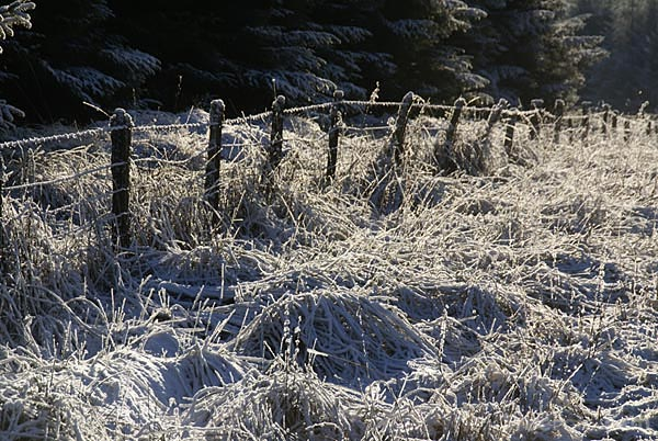 Picture of Winter scene on Alston Moor - Free Pictures - FreeFoto.com