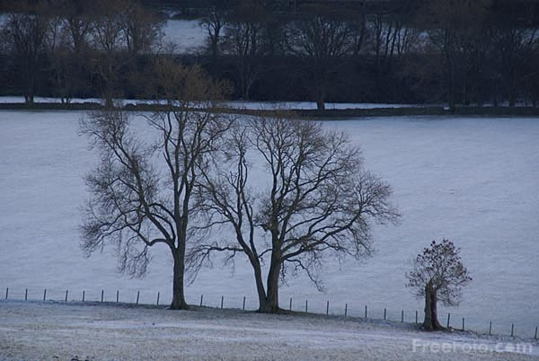 Picture of Trees in the snow - Free Pictures - FreeFoto.com