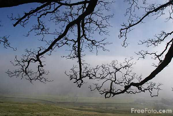 Picture of Misty Spring Morning in Allendale - Free Pictures - FreeFoto.com