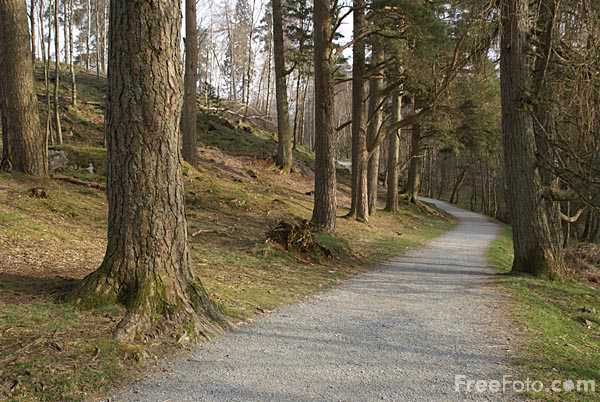 Picture of Footpath, Tarn Hows, Coniston, Cumbria - Free Pictures - FreeFoto.com