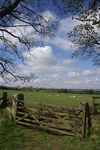 Picture of Northumberland Countryside - Free Pictures - FreeFoto.com