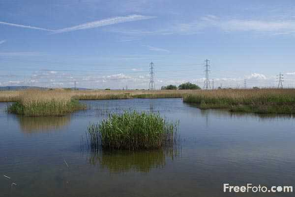Picture of Newport Wetlands - Free Pictures - FreeFoto.com