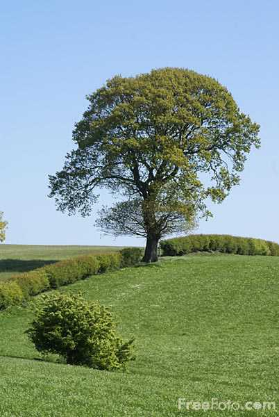 Picture of Tree in a field of green grass - Free Pictures - FreeFoto.com