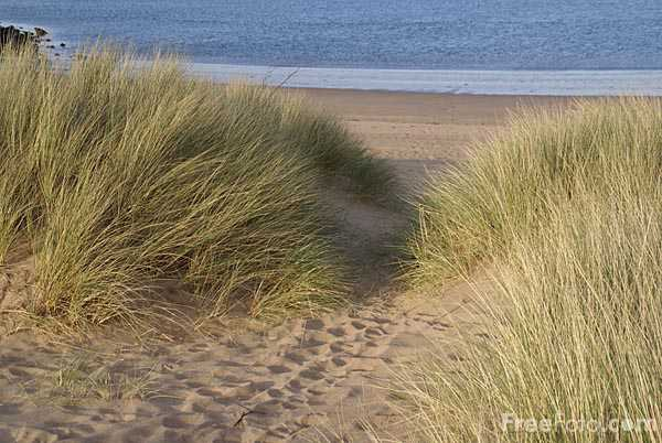 Picture of Path to the beach and Dune Grass - Free Pictures - FreeFoto.com
