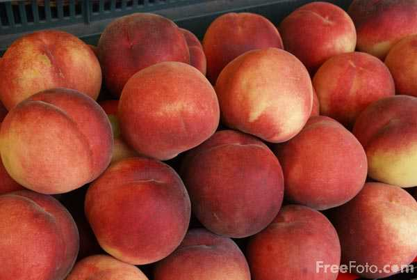 Picture of Peaches - Free Pictures - FreeFoto.com