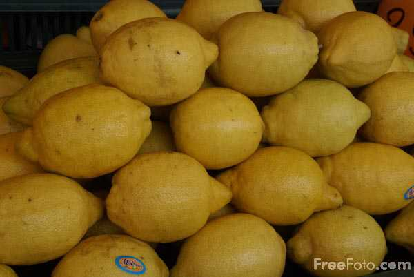 Picture of Lemons - Free Pictures - FreeFoto.com