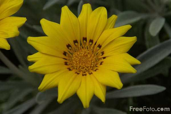 Picture of Yellow Flower - Free Pictures - FreeFoto.com