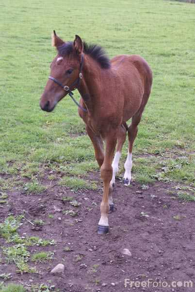 Picture of Brown Foal - Free Pictures - FreeFoto.com