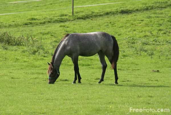 Picture of Yearling horse - Free Pictures - FreeFoto.com