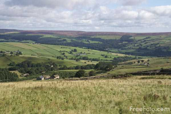 Picture of Bewerley Moor - Free Pictures - FreeFoto.com
