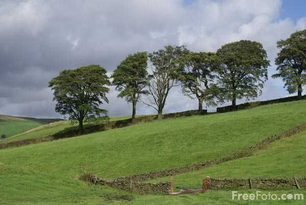 Picture of Line of Trees - Free Pictures - FreeFoto.com