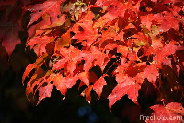 Picture of Fall Color - Free Pictures - FreeFoto.com