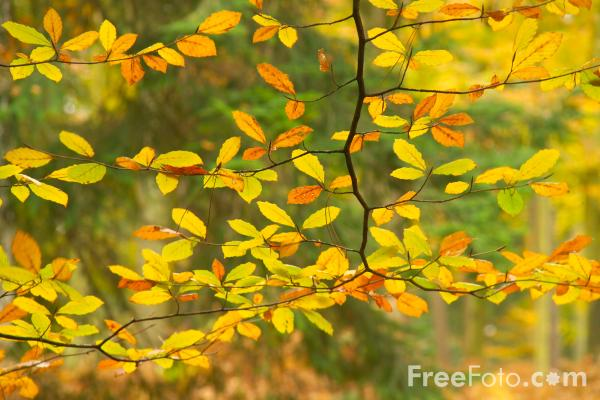 Picture of Autumn colour in the New Forest - Free Pictures - FreeFoto.com