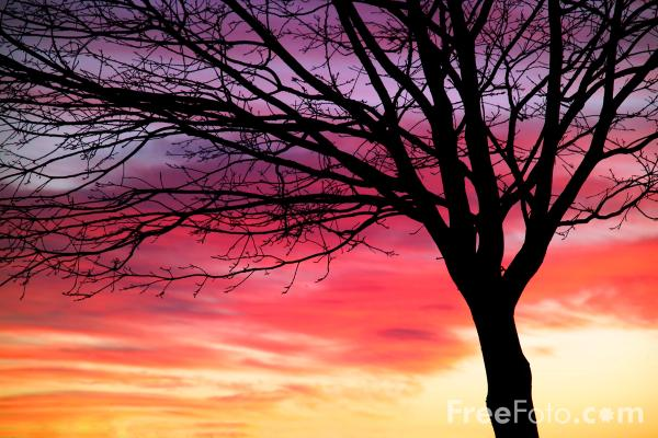Picture of Sunset 2 - Free Pictures - FreeFoto.com
