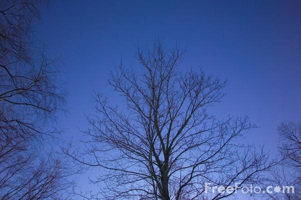 Picture of Tree Silhouette - Free Pictures - FreeFoto.com