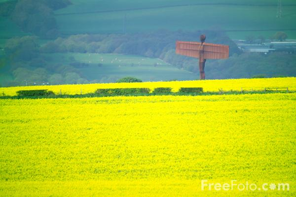 Picture of The Angel of the North, Gateshead - Free Pictures - FreeFoto.com
