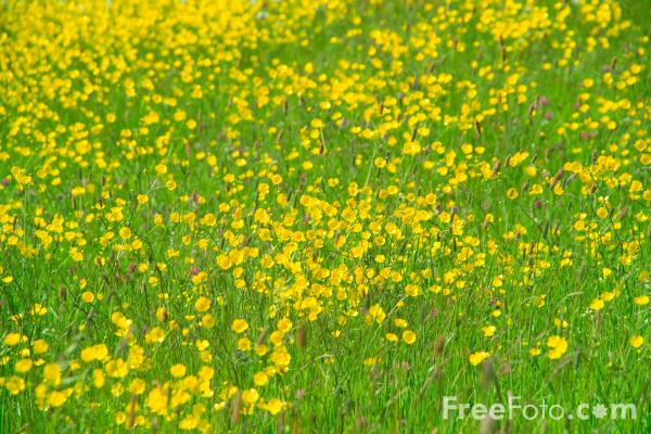 Picture of Spring Meadow - Free Pictures - FreeFoto.com