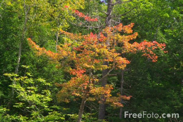 Picture of Fall Color / Autumn Colour New Hampshire - Free Pictures - FreeFoto.com