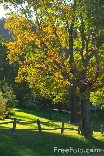 Picture of Fall Color / Autumn Colour Vermont - Free Pictures - FreeFoto.com