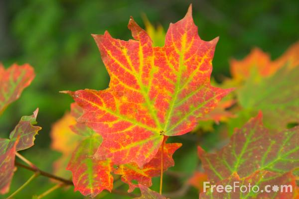 Picture of Fall Color New England - Free Pictures - FreeFoto.com