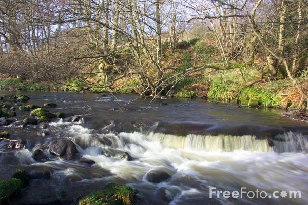 Picture of River Derwent, Allensford, County Durham - Free Pictures - FreeFoto.com