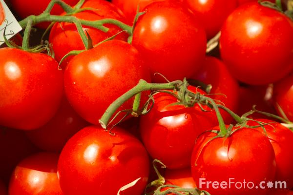 Picture of Red Tomatoes - Free Pictures - FreeFoto.com