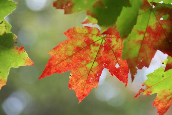 Picture of Fall Color, Autumn Colour, New England - Free Pictures - FreeFoto.com