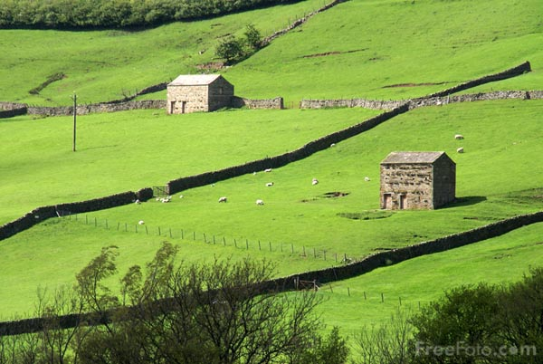 Picture of Swaledale Barns near Gunnerside - Free Pictures - FreeFoto.com