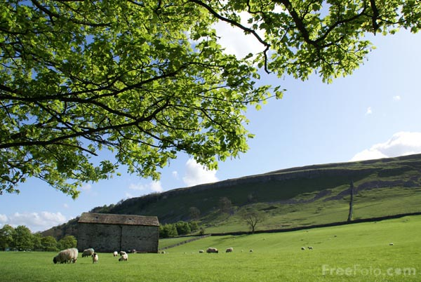Picture of Field near Kettlewell - Free Pictures - FreeFoto.com