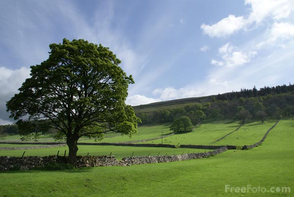Picture of Tree and green fields - Free Pictures - FreeFoto.com