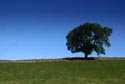 Image Ref: 9907-09-1 - Tree and Blue Sky, Viewed 17194 times