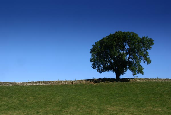 Picture of Tree and Blue Sky - Free Pictures - FreeFoto.com