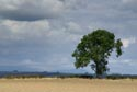 Image Ref: 9907-09-2 - Tree and grey sky, Viewed 4709 times