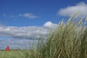 Image Ref: 9907-09-3 - Seaside Grass, Viewed 9022 times
