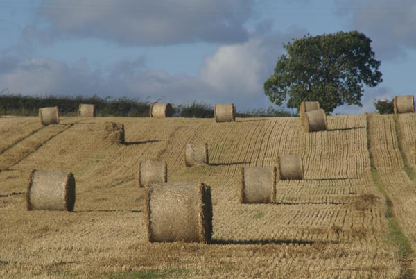 Picture of Bales of straw - Free Pictures - FreeFoto.com