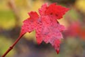 Image Ref: 9907-10-10 - Fall Color, Viewed 8500 times