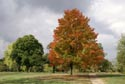Image Ref: 9907-10-18 - Fall Color, Viewed 6757 times