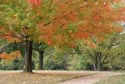 Image Ref: 9907-10-19 - Fall Color, Viewed 7932 times